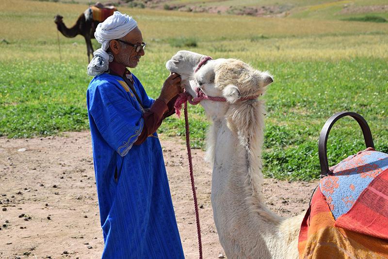 Vivace Travel_Marokko_Kamelhirte_gallerie